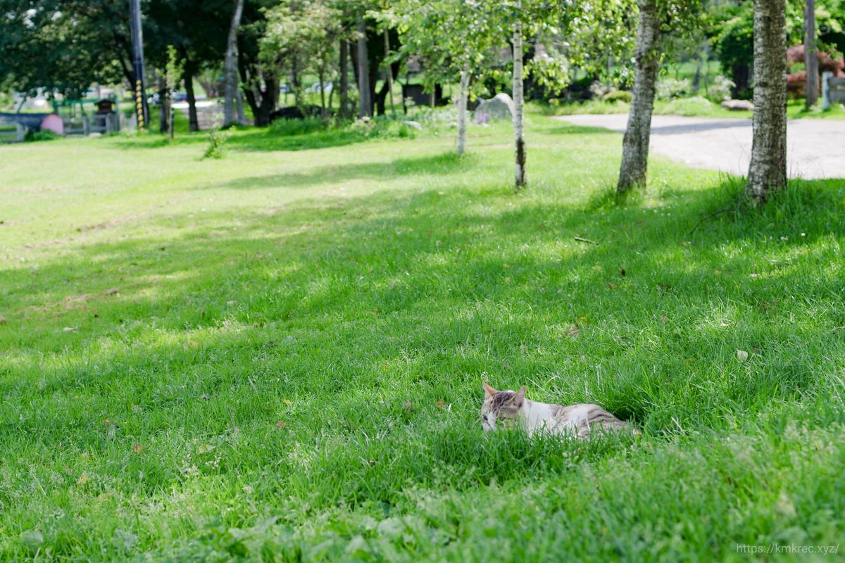 箱根牧場の猫