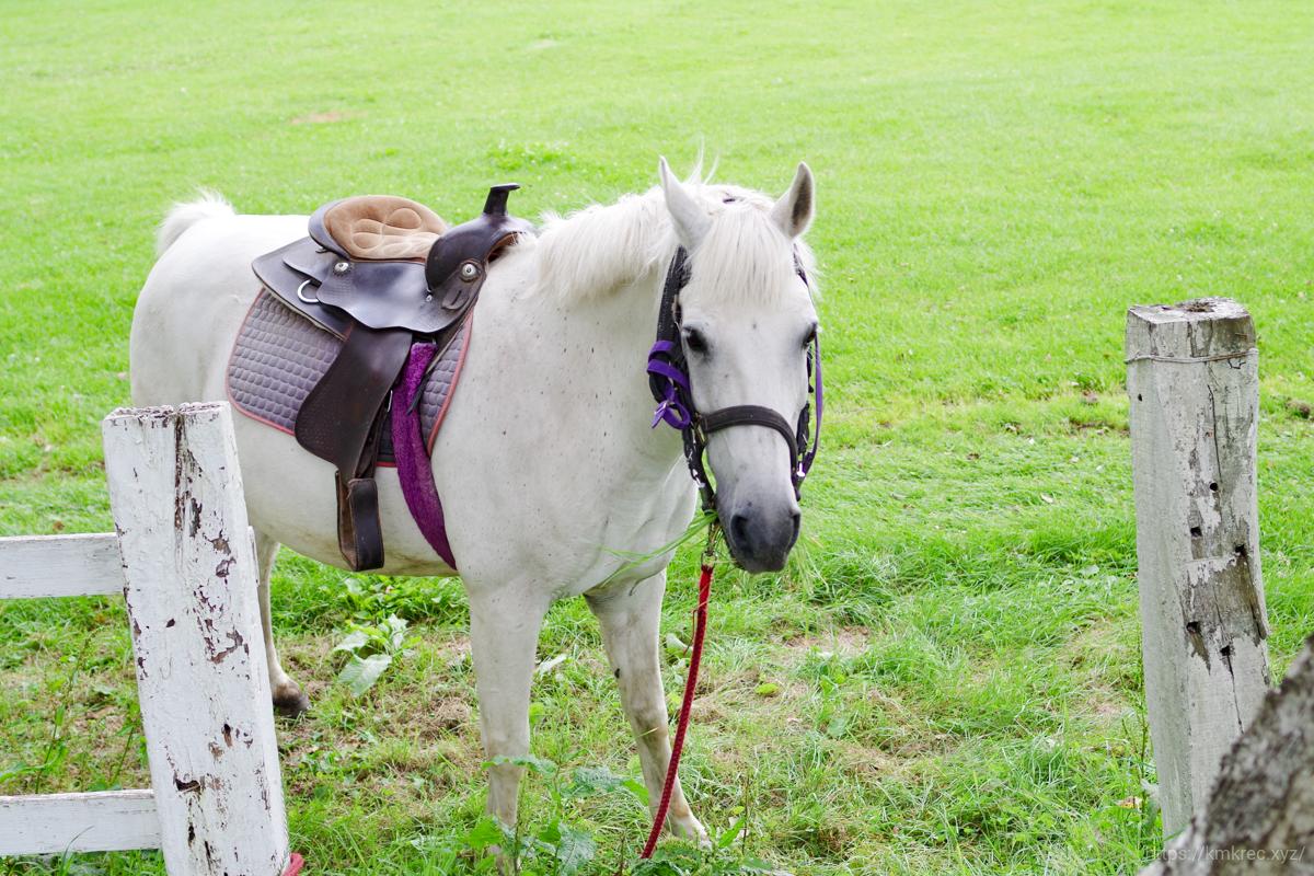 箱根牧場の馬