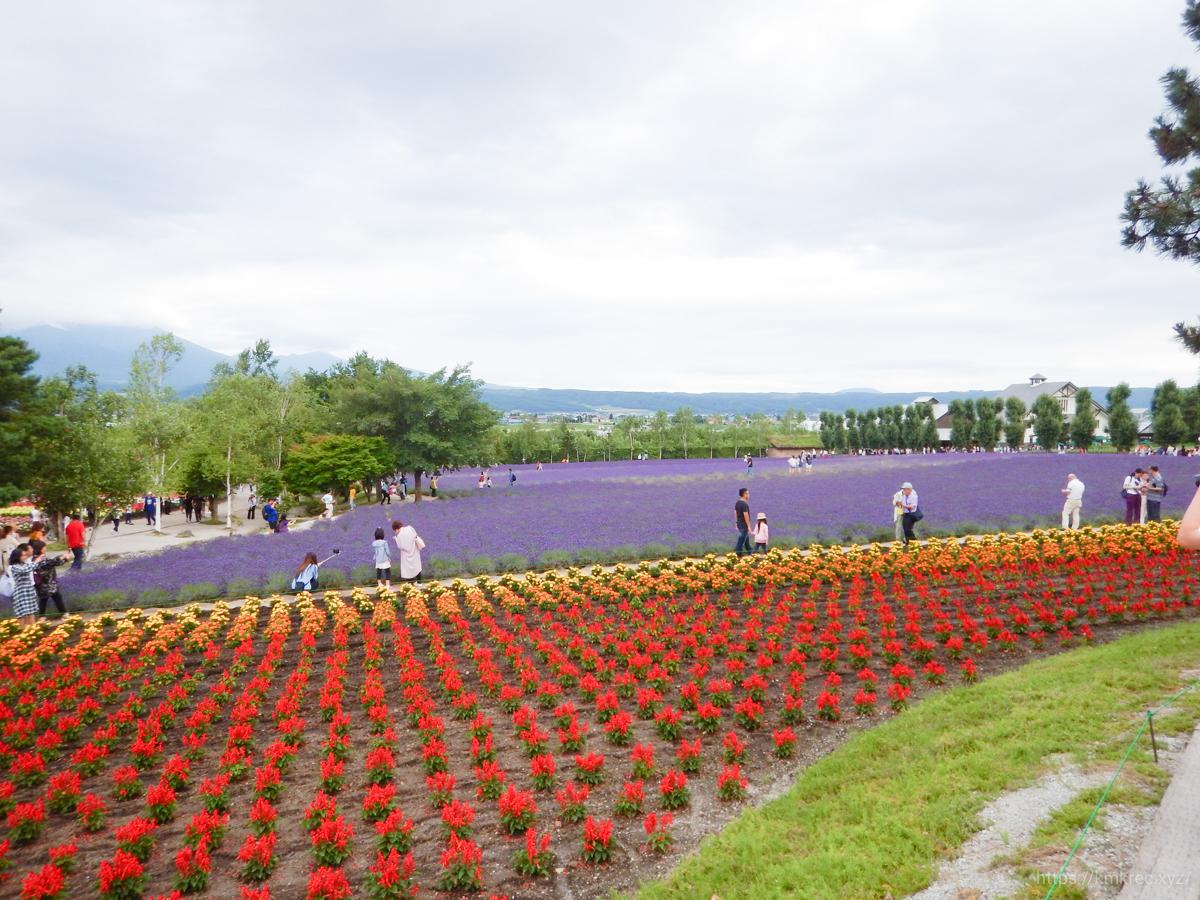 ファーム富田の景色